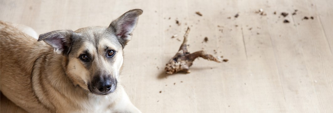 Trockenfutter für erwachsene Hunde